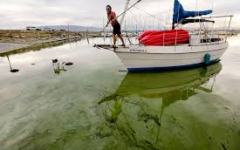 Effects of Pollution and Algae Bloom on Lakes in Utah